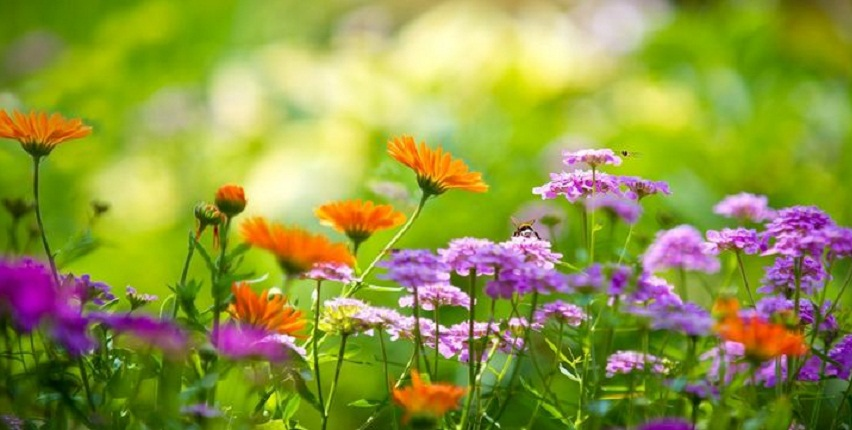 Beautiful garden with summer flowers
