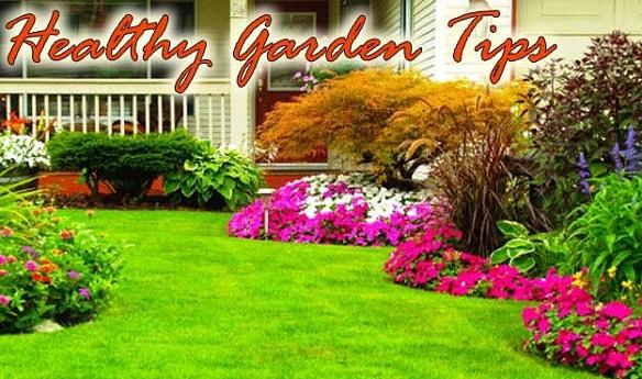 Tips for a healthy garden
